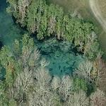 Three Sister Springs FL - Manatees
