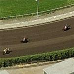 Horses on the track at Golden Gate Fields (Birds Eye)