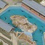 Sea Lions at SeaWorld San Antonio