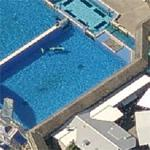 Killer Whale At Sea World San Diego (Birds Eye)