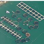 Aquaculture Tubs (Birds Eye)