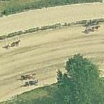 Horses on the track at Ippodromo di Vinovo