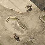 African Elephants at Cleveland Metroparks Zoo (Birds Eye)