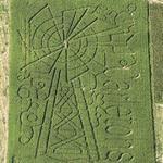 Windmill Corn Maze