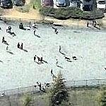 Dogs and Owners at Reston, VA Dog Park (Birds Eye)