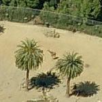 Giraffe at the Oakland Zoo (Birds Eye)