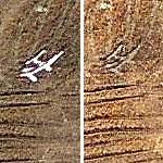 Strange Plane Impression in farmer's field
