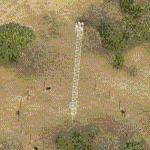 Moonlight Tower (Birds Eye)