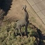 Giraffe statue at Dallas Zoo (Birds Eye)