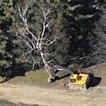 Pulling down a tree (Birds Eye)