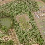 Dole Pineapple Maze (Birds Eye)