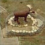 Mac, the World's Largest Moose (Birds Eye)