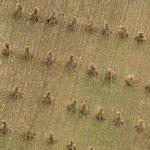 Amish haystacks (Birds Eye)