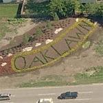 'Oak Lawn' (Birds Eye)